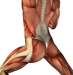 Yoga Anatomy | BYB Yoga